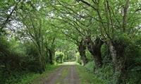 MAINE ET LOIRE : La préservation des chemins ruraux